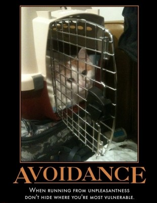 not-the-best-place-avoid-vet-hide-cat-cage-demotivational-posters