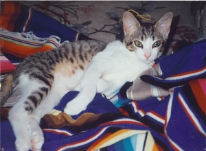 Our Cat Tiger, 1999