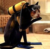 Even Cats Look Cooler in Dive Gear