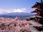 Fuji,_Japan_-_Cherry_Blossoms_and_Mount