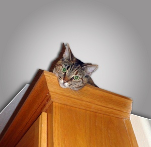 Cleo supervises food-service operations from on top of the kitchen cabinets.