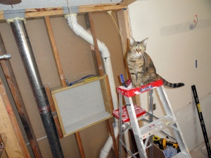 Not a step?  Cleo supervises DIY projects from on-high.