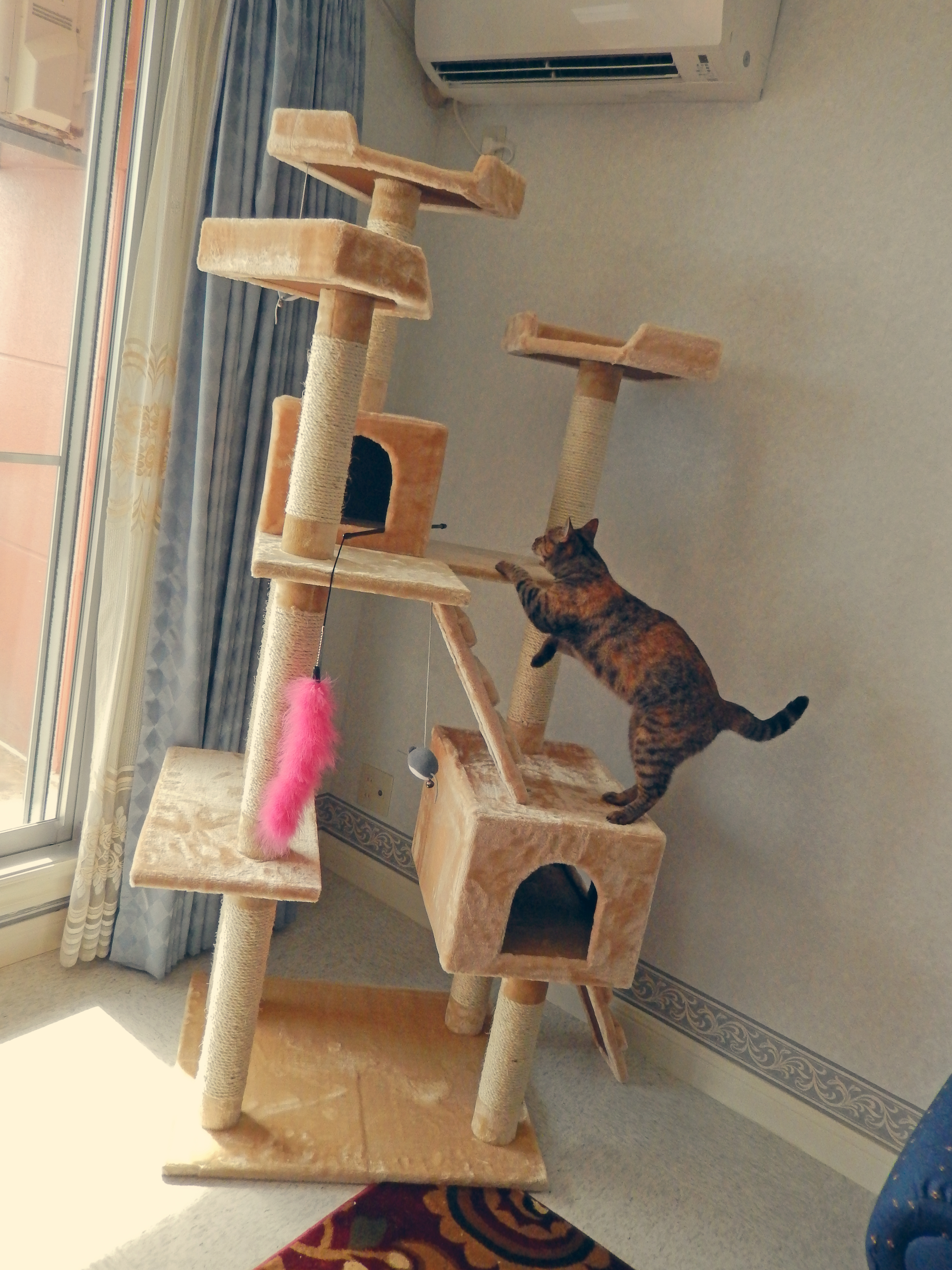 How to build a cat condo for How to build a cat tree