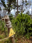 Okinawa Forest Adventure 2014, many dangers