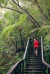 Okinawa Nov 2013, Hiji Falls, boardwalk through the jungle
