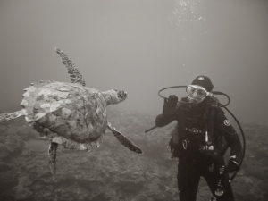 Jody greets a friendly sea turtle