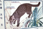 Iriomote Okinawa 2014, Urauchi River, Iriomote cat (billboard) sighting