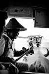 Iriomote Okinawa Vacation 2014, Yubu Island, ox cart crossing entertainment (B&W impact) WM