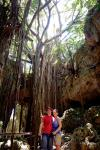 Okinawa 2014, Valley of Gangala, Kevin and Jody portrait with the valley's banyan