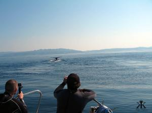 Humpbacks sharing the day with us