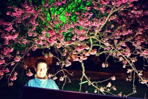 Okinawa Cherry Blossom Festival 2015, Nakajin Castle, Jody in the sakura light