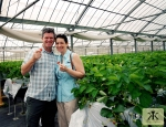 Okinawa Apr 2015, Strawberry Picking, a couple of fresh strawberries WM