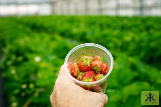 Okinawa Apr 2015, Strawberry Picking, cup of fresh strawberries WM