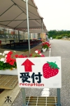 Okinawa Apr 2015, Strawberry Picking, sweet reception WM