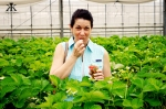Okinawa Apr 2015, Strawberry Picking, yummy fresh strawberries WM