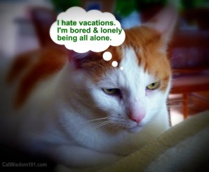 cat-sitting-funny-vacation-bored-300x247
