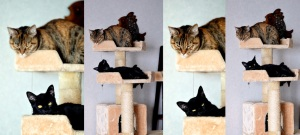 The Cat Castle