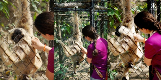 Cambodia 2015, Phnom Tamao Wildlife Rescue Center, backscratch for a hairy friend WM