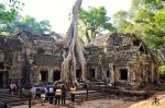 Cambodia 2015, Ta Prohm, ruined tree 2 WM