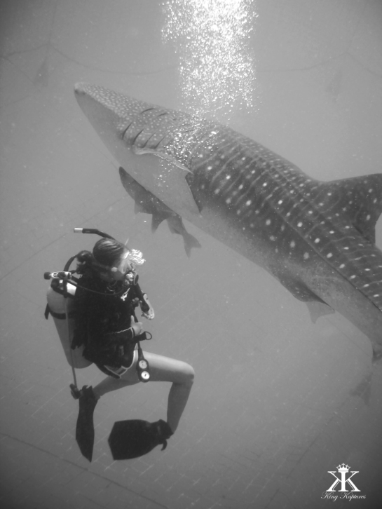 Dive the Blues 2015, Whale Shark Dive, Tori with the Shark WM