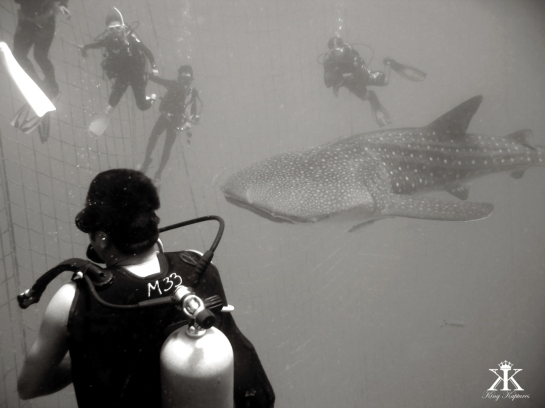 Dive the Blues 2015, Whale Shark Dive, watching from the net WM