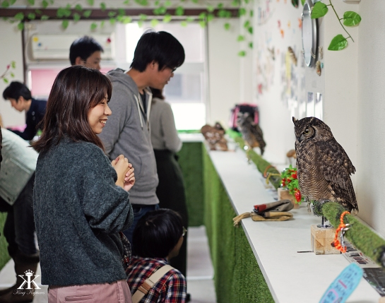 kobe-2016-owl-cafe-happy-visitors-wm
