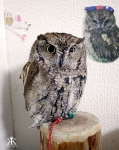 kobe-2016-owl-cafe-owls-perch-wm