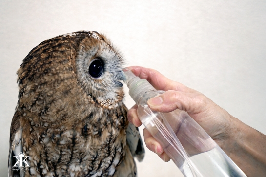kobe-2016-owl-cafe-thirsty-owl-wm