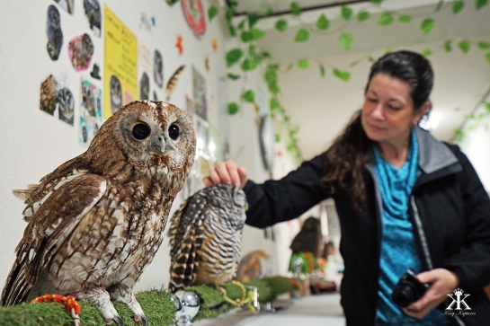 kobe-2016-owl-cafe-visiting-owls-at-the-owl-cafe-wm