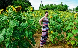 Love and Radiance:  Sunflowers of the Ryukyus